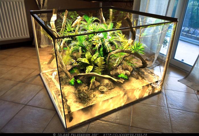 Island Paludarium 360° de A à Z - 100x100x70 (new projet ... 10 Gallon Dart Frog Vivarium