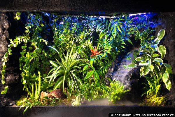 eclairage terrarium plante